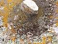 Lichens - panoramio.jpg