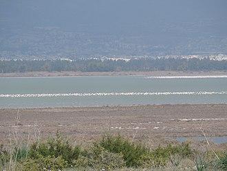 Limassol Salt Lake - Image: Limassol Salt Lake 4