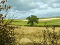 Lone Tree - geograph.org.uk - 563629.jpg