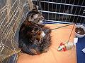 MTP Cat Show 2230019.JPG