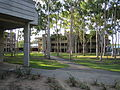 Macquarie University, Sydney, Australia - central courtyard.jpg