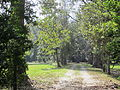 Magnolia Lane Plantation from River Road 1.JPG