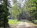 Magnolia Lane Plantation from River Road 1.JPG