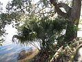 Magnolia Plantation and Gardens - Charleston, South Carolina (8556514562).jpg