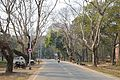 Main Road - Indian Institute of Technology Campus - Kharagpur - West Midnapore 2015-01-24 4839.JPG