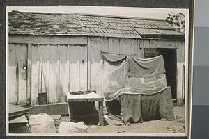 "Asian immigration to the United States - Makeshift shelter for Indian farm laborers (referred to as a ""Hindu bed"") in California."