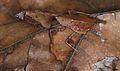 Malaysian Dead Leaf Mantis (Deroplatys lobata) (8737980883).jpg