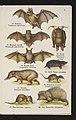 Maly atlas zwierzat ssacych. Z. 1. 1927 (116839688).jpg