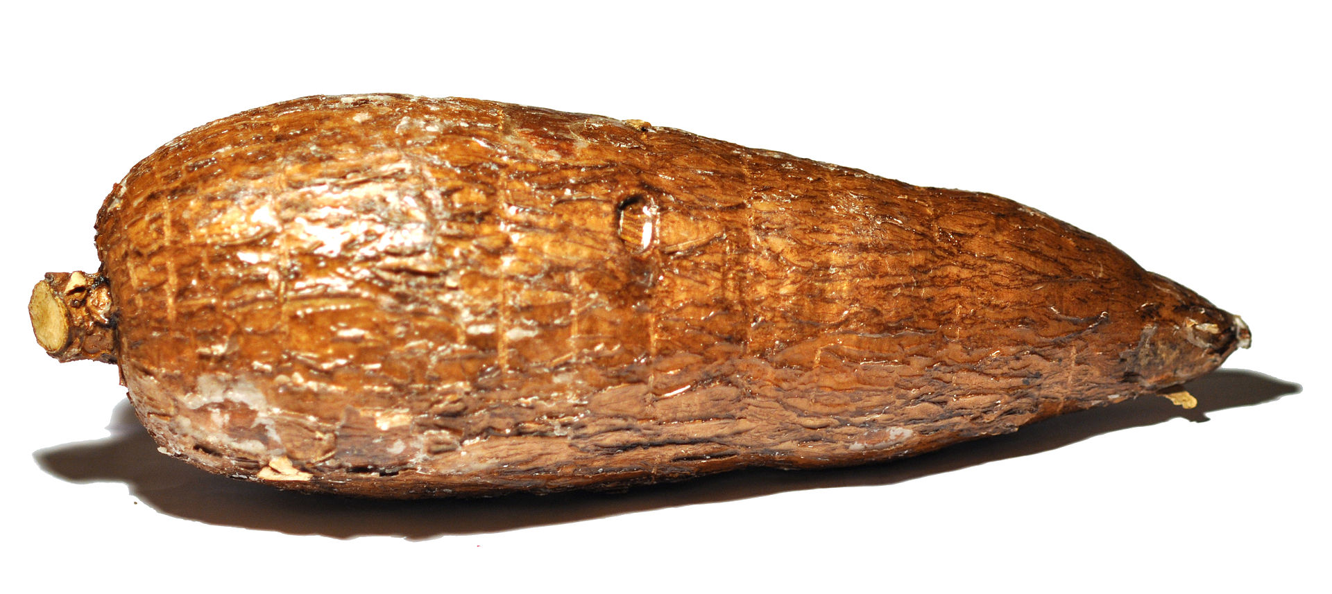 Photograph of oblong brown tuber