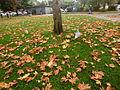 Maple everywhere.jpg