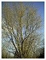 March Denzlingen - Master Season Rhine Valley Photography - panoramio (11).jpg