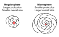 Megalosphere and Microsphere.png