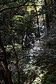 Meiji no Mori Minoh Quasi-National Park Minoh Osaka pref Japan14s3.jpg