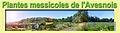 MessicolesAvesnoisCouv2.jpg