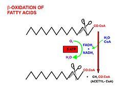 propionate oxidation