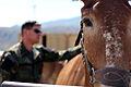 Mountain Warfare Training Center teaches advanced horsemanship 130904-M-EV518-1958.jpg
