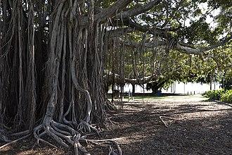 East Brisbane, Queensland - Mowbray Park in East Brisbane