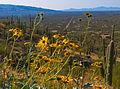 Mt. Lemmon 2.jpg