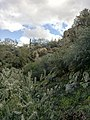 Mt. Pinter Base Loop, Tonto National Forest, Butcher Jones Trail, Fort McDowell, AZ 85264, USA - panoramio (15).jpg