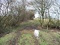 Muddy bridleway - geograph.org.uk - 1732181.jpg