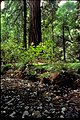 Muir Woods National Monument, California (72df16ba-ceb6-4036-959c-e950848d04c1).jpg