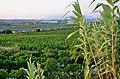 Muntanyes de l'Ordal - 61.jpg