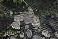 Mushroom (36305967811).jpg