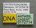 Myrmica ruginodis casent0172714 label 1.jpg