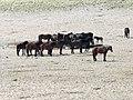 NA-garub-horses-1.jpg