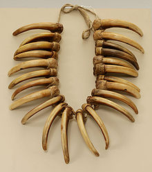 Les griffes d'ours se voyaient associer de nombreuses vertus, et les chamanes officiaient en portant une couronne de griffes de grizzly[