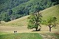 NP001 nacionalni park sutjeska tjentiste.jpg