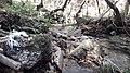 Nagarjun- shivapuri national park 20190316 133554.jpg