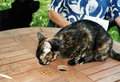 Nagycsepely, Ungarn, Niki beim Fressen im Garten, Juni 2012.png