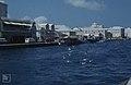 Nassau town quay, Laughing gulls (24005265707).jpg