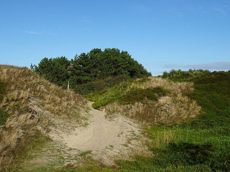 File:Nationalpark Niedersächsisches Wattenmeer - Spiekeroog - Inselinnere Landschaft (6).jpg