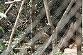 Nature 190629-WA0072.jpg