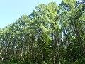 Nature in Smolensk - 67.jpg
