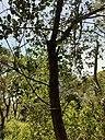 Nature tree.jpg