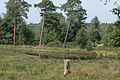 Naturschutzgebiet Elmpter Schwalmbruch Sommer 2015 -8769.jpg