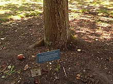 Newton's tree, Botanic Gardens, Cambridge (sign).jpg