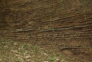 Affioramento di calcari marnosi del Rosso Ammonitico con una evidente faglia diretta che ribassa il blocco roccioso sulla destra nell'immagine