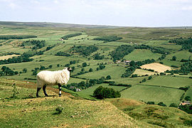 North York Moors.jpg