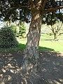 Nottingham Memorial Gardens 0398.JPG