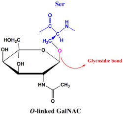 O-linked glycosidic bond.png