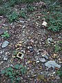 Objects on the ground near Lake Monroe in Clear Creek Township.jpg