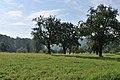 Obstwiese im Greutterwald (2).jpg