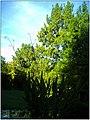October University Freiburg Plaza - Master Botany Photography 2013 Egypt Papyrus - panoramio.jpg