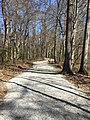 Old River Trail Mississippi 3.jpg