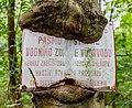 Old inscription being taken by a tree. Javorníky, Czech Republic.jpg