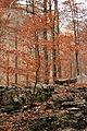 Ordesa. Naranja de otoño.jpg